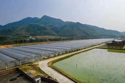 """翁源渔溪村:""""产业扶贫""""才是彻底摆脱贫困的根本之道"""