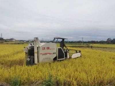 水稻收割季 机械收割唱主角