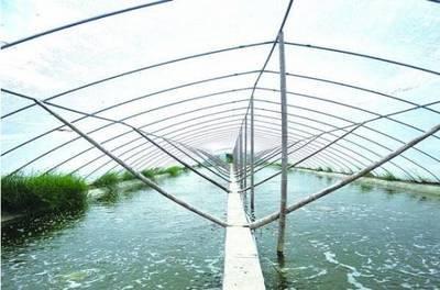 新年首期虾稻共作培训班开班古市镇55名种养大户参训